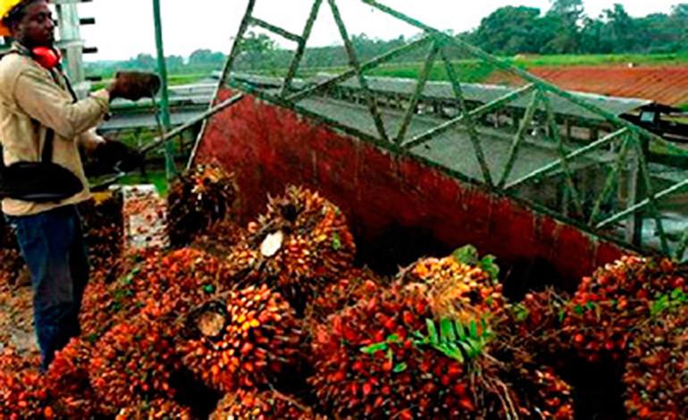 $ 400 millones en divisas generaexportación de aceite de palma