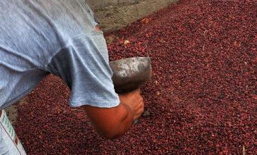 La SAG alerta sobre contrabando de frijol rojo