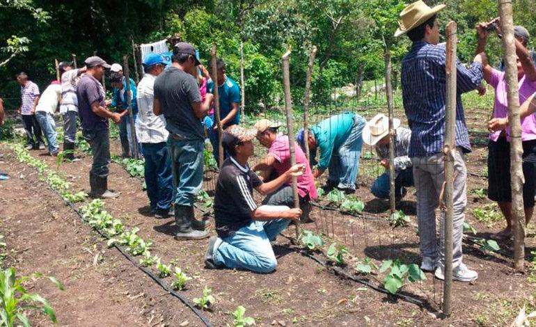 En el corredor seco de Honduras: 4 mil familias adoptan tecnologías de microriego