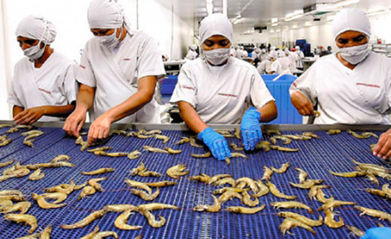 Confían en reabrir ventas de camarón a México