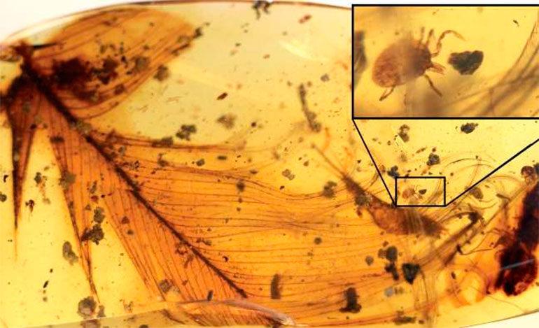 El increíble descubrimiento sobre las garrapatas y los dinosaurios