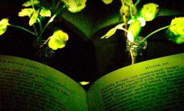 Desarrollan una planta que emite luz