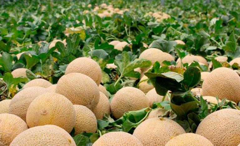 Melones hondureños llegan a Keelung, Taiwán