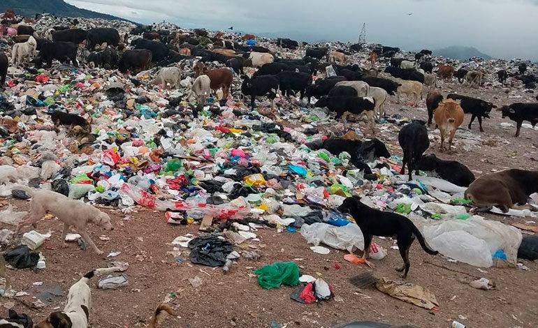 Alcaldía anuncia nuevas rutas para la recolección de basura