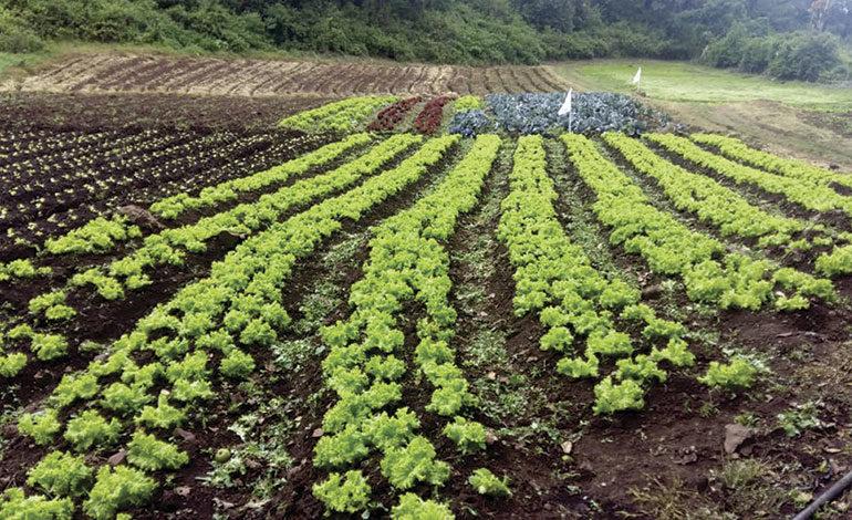 """Programa """"De mi Tierra"""": Exitoso modelo agroempresarial"""