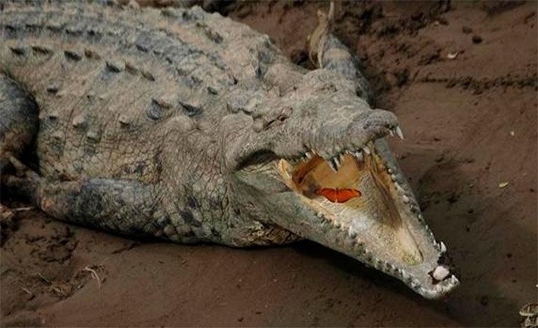 Un cocodrilo devora a un pastor durante un bautizo