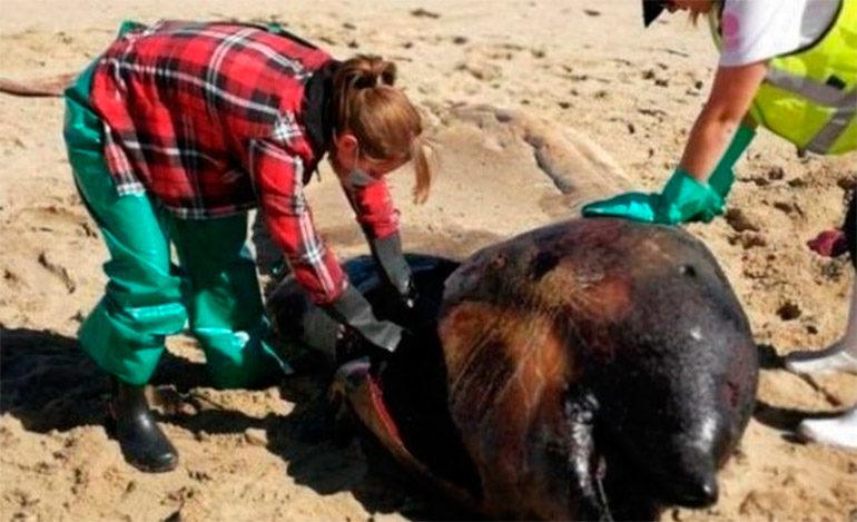 Una misteriosa y extraña criatura marina apareció muerta en una playa africana