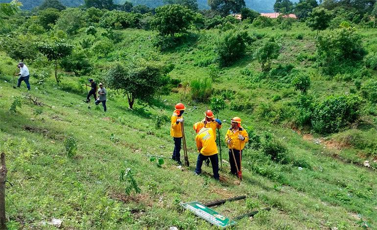 Personal de EEH planta 300 árboles en El Progreso