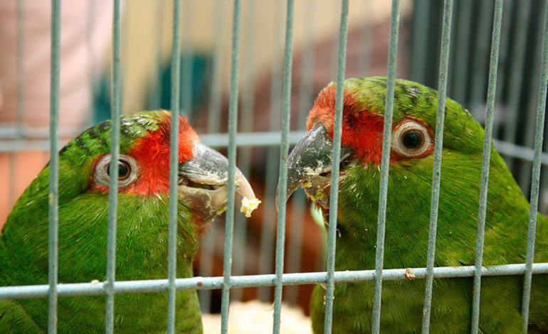Un 40% de lo pagado por registro  de aves pasa a las arcas del Estado