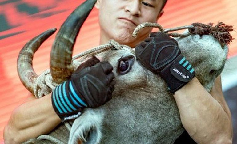 Luchadores de kung fu se pelean con toros en China