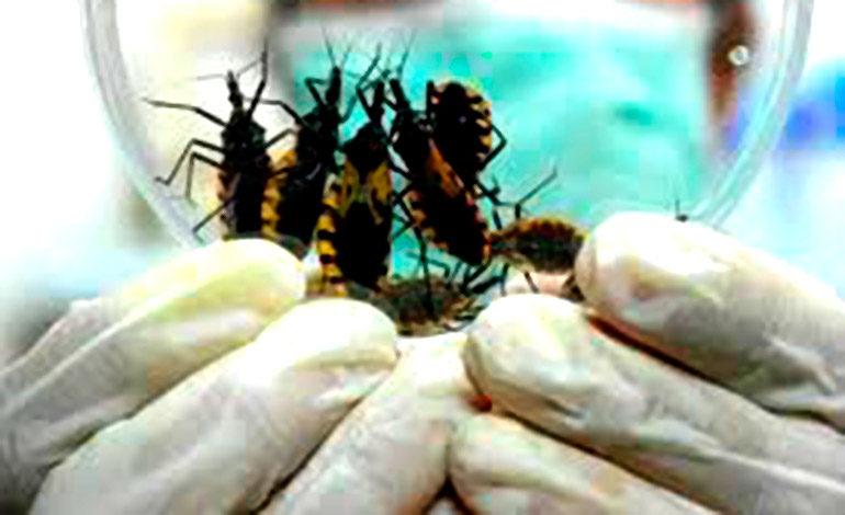 """OPS: Honduras avanza en la erradicación del """"Mal de Chagas"""""""