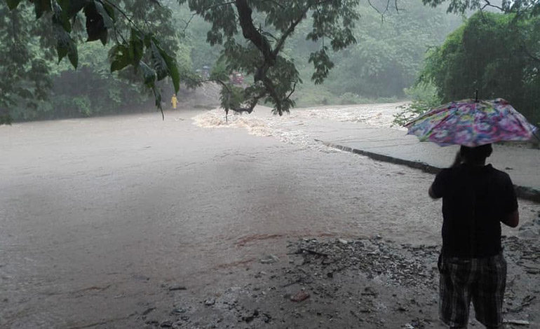 Lluvias provocan caídas de árboles y calles inundadas