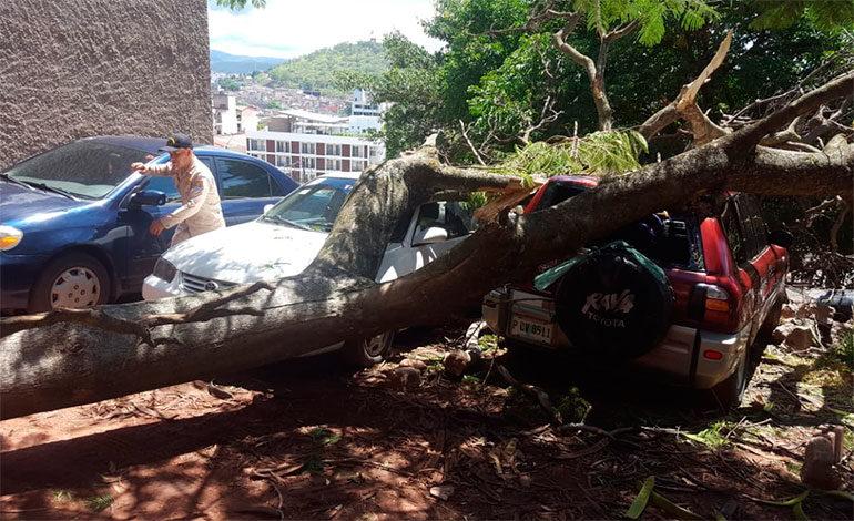 Árbol cae sobre tres vehículos en Tegucigalpa
