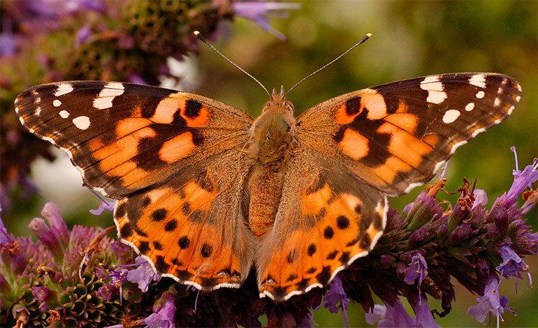 Cientos de mariposas tropicales pasan el invierno en un museo de Nueva York
