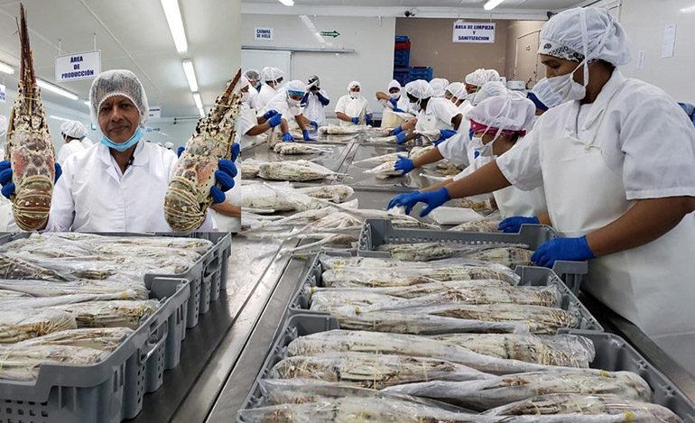 Nueva empresa incursionará con productos de mar en UE