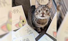 Conoce la triste historia de una gata con 'síndrome de down'