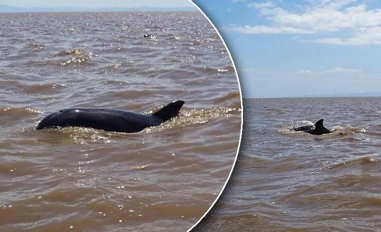Delfines sorprenden a pescadores y turistas de las playas de Cedeño