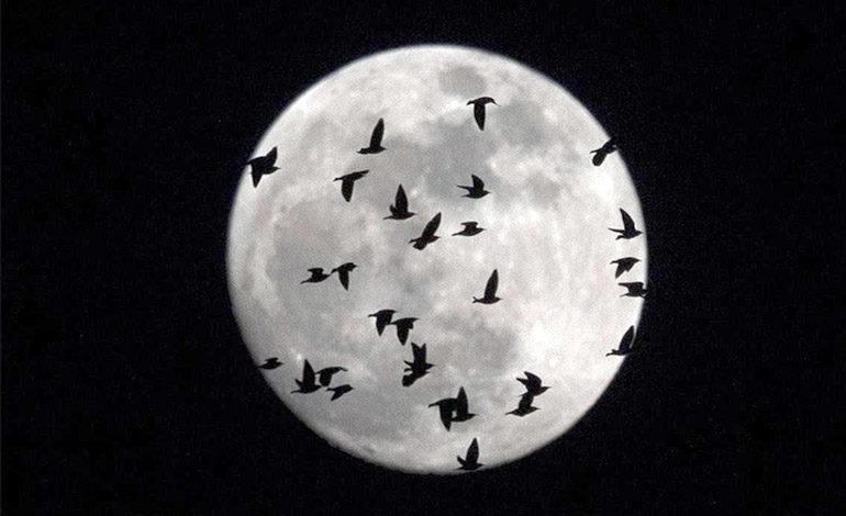 """Hoy se verá la Luna """"de nieve"""", la más brillante en 7 años"""