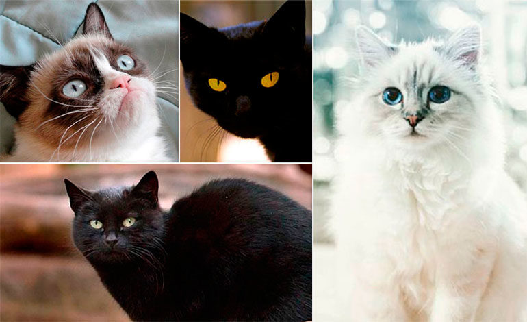 ¿Le dejarías herencia a tu gato?