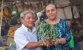 """Crece demanda interna de chive denominado """"viagra hondureña"""""""