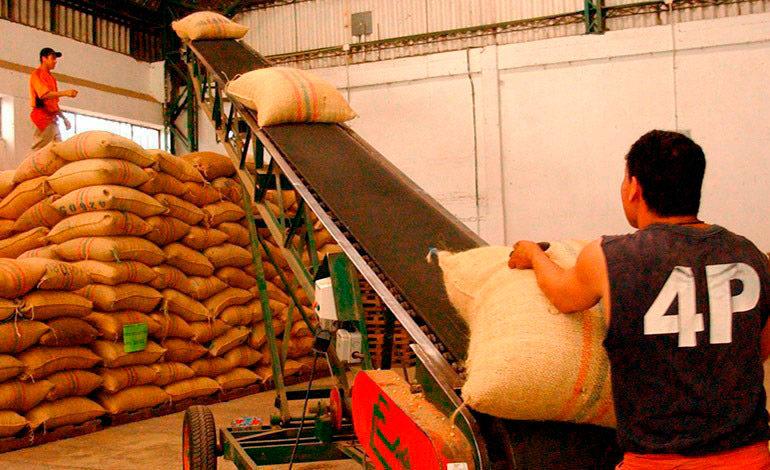 Honduras exporta $ 419,5 millones en café, 25% menos que ciclo pasado