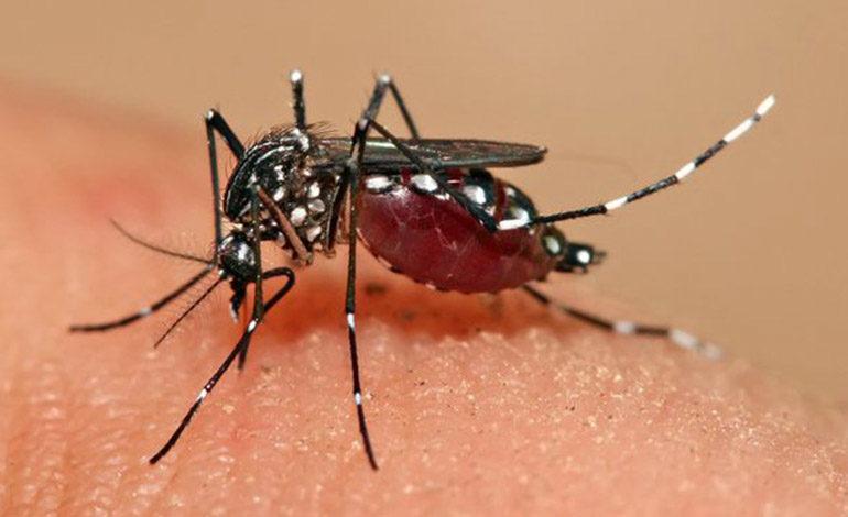 En un 90% aumentan casos por dengue