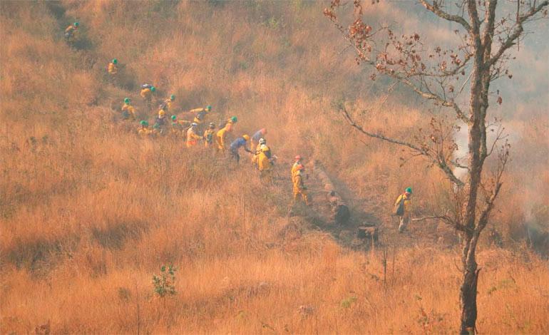 ICF reporta 358 incendios que afectaron casi 17 mil hectáreas de bosque