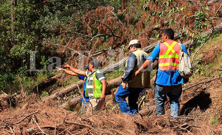 Con proyecto de ley desalojarán asentamientos de Reserva El Merendón