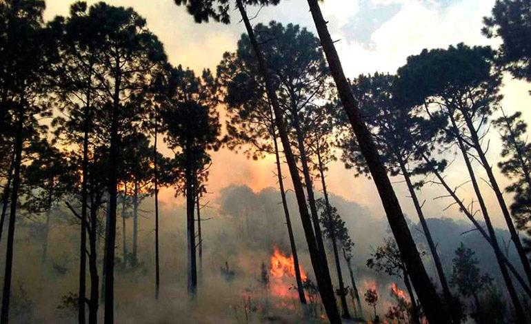 8 mil hectáreas de bosque destruidas en 222 incendios