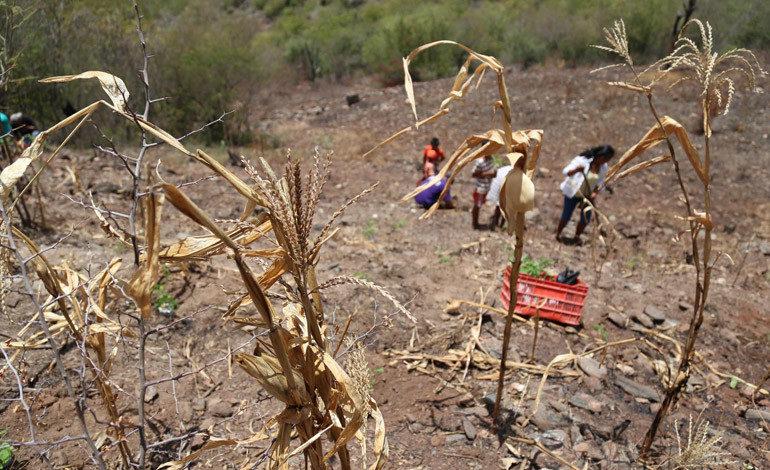 Sequía afecta al 50 % de familias hondureñas e incide en nutrición infantil