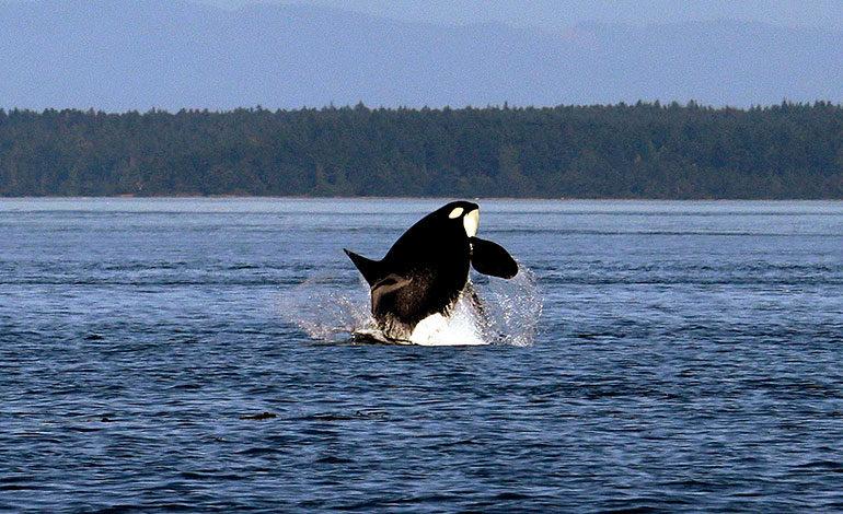 Filipinas: una ballena con 40 kg de plástico en su estómago muere de hambre