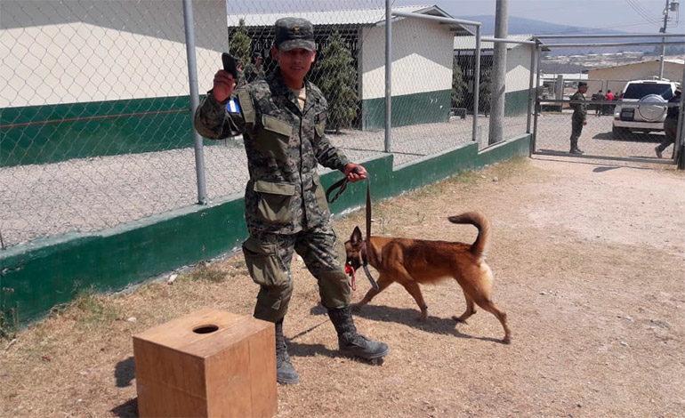 Con 150 caninos pretenden detectar celulares en cárceles
