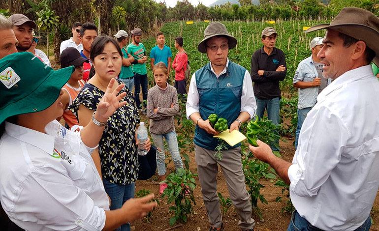 Coreanos evalúan zonas productoras de hortalizas en Santa Bárbara