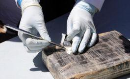 Intervenidos 300 kilos de cocaína en el este de España procedentes de Brasil