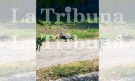 Así fue el momento en que raptaron a cuatro hombres en La Ceiba (Video)
