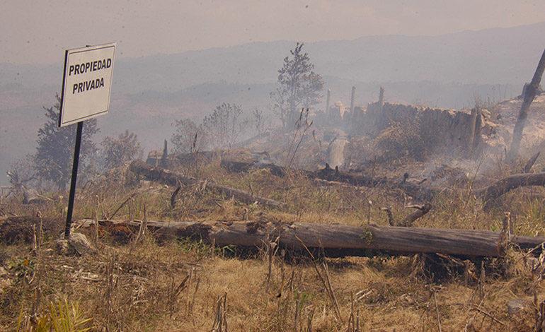 Investigan si bosques son quemados para venderlos por lotes (Video)
