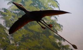 Descubren en Cuba el primer fósil de pterosaurio registrado en la isla