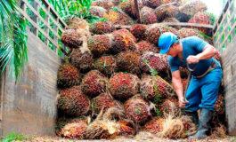 Rubros de agricultura y pesca registran mejoría en el 2019