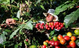 Reconocen diputados: Bajos precios del café contribuyen a migración