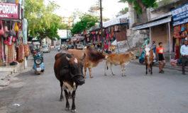 Un hombre muere linchado en India cuando estaba desollando un buey