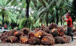Promueven certificación del cultivo de palma africana