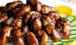 Universitarios degustan platillos  con crujientes escarabajos