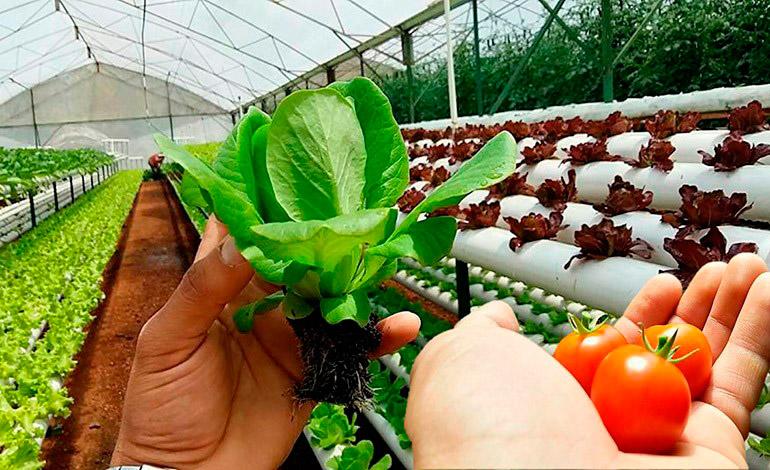 Hortalizas y legumbres impulsan la parte agrícola