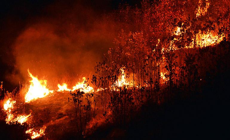 ICF: Incendios arrasan con 15 mil hectáreas de bosque en 10 municipios