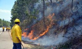 Según estadísticas del ICF: Quemadas 30 mil hectáreas de bosque