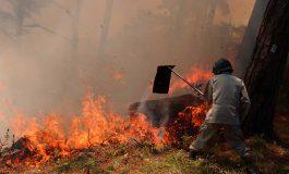 34 mil hectáreas de bosque quemadas