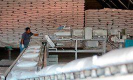 Ingenio produce más de dos millones de quintales de azúcar