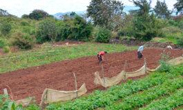 Desde hoy deben iniciar siembra de  granos en parte de Corredor Seco