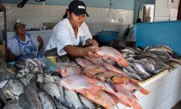 Frescos y a buen precio los pescados para las sopas