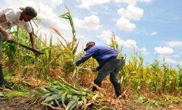 Prograno teme una fuerte caída en cosecha de granos